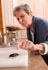 good housekeeping doesn't always prevent pest infestations