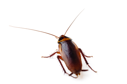 PestWorld is a great resource for kids who want to learn about bugs