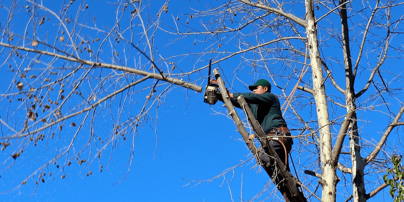 a certified arborist removing tree branches as part of the tree removal process