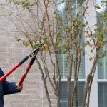 un especialista en jardinería podando un árbol de una casa