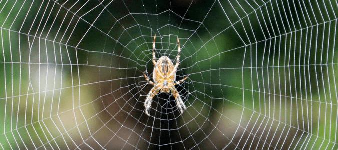 Spider Spin Webs