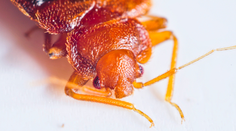 bed bugs are extremely hard to remove without the help of a professional pest control company abc