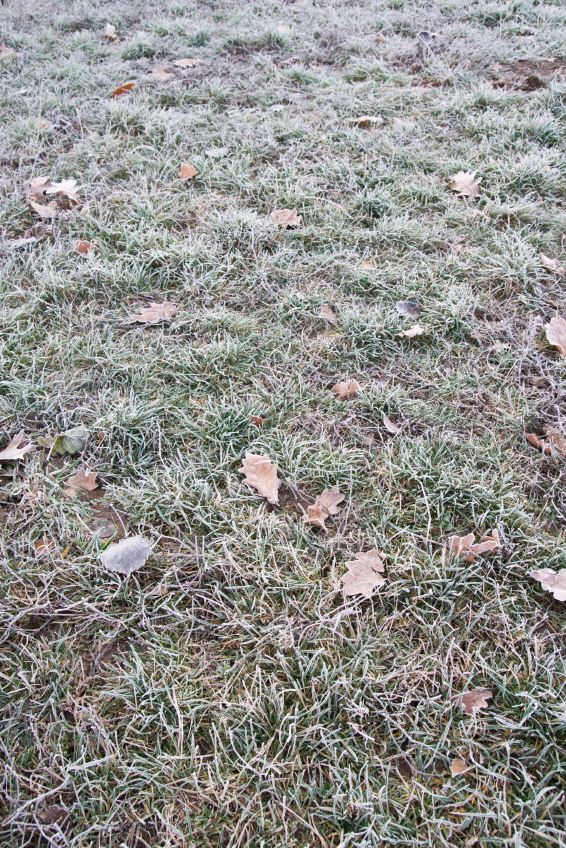 Winter Lawn Care Don Ts Abc Home Amp Commercial Services Blog