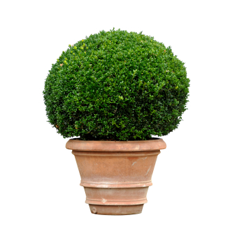 Keeping Shrubs Healthy And Hy Abc Home Commercial