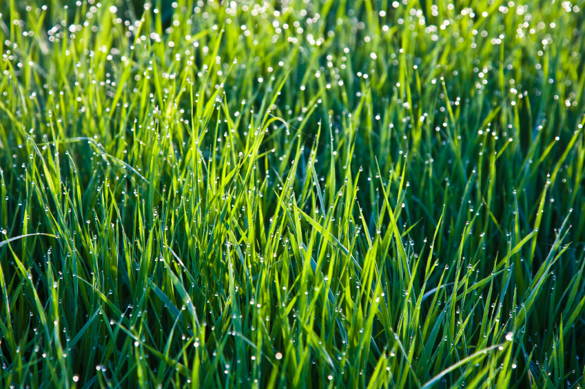 Get Your Lawn Ready For Winter In East Texas Abc Home