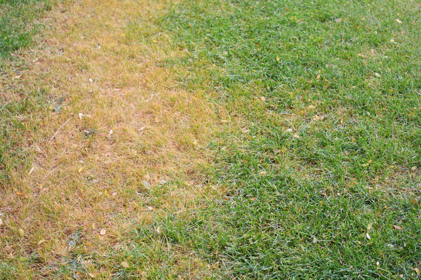 Brown Spot Rust And Fairy Ring Can Your Lawn Survive The