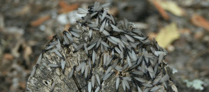 swarmers