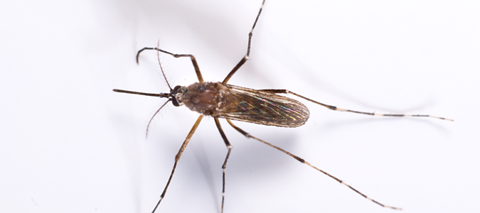 learn the best mosquitoes repellents