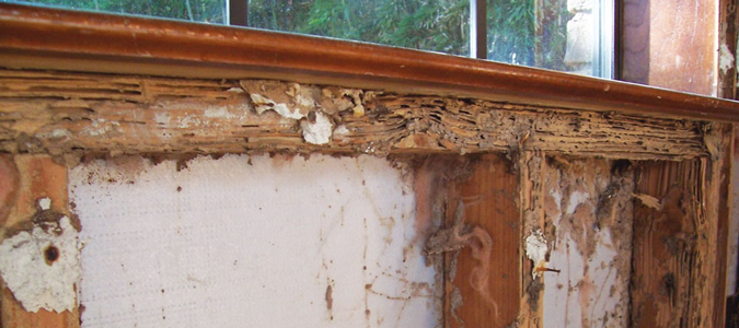 Termite Damage 101 What You Should Know Abc Blog