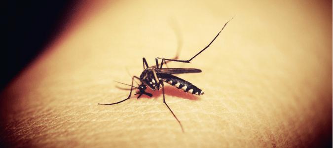 Mosquito bite on foot
