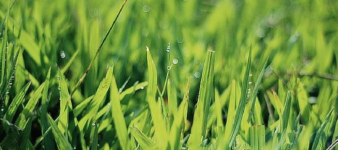 holganix: best organic lawn care product