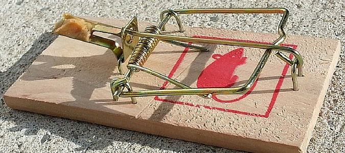 mouse trap featured img
