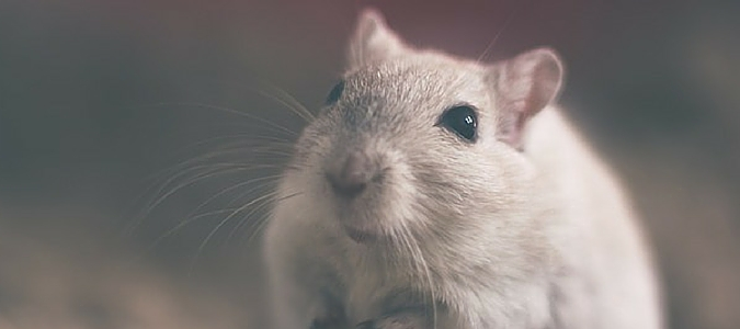 rodents you should know featured img