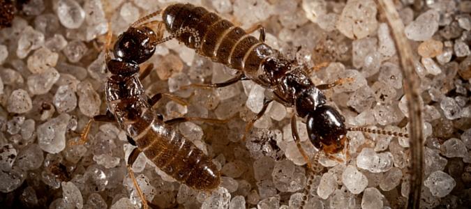 can termites eat concrete