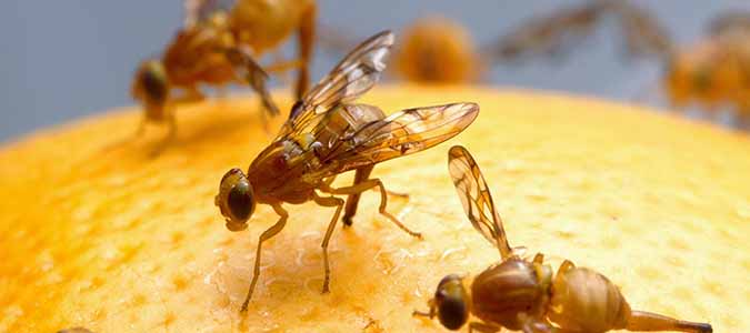 Where Do House Flies Come From? | ABC Blog