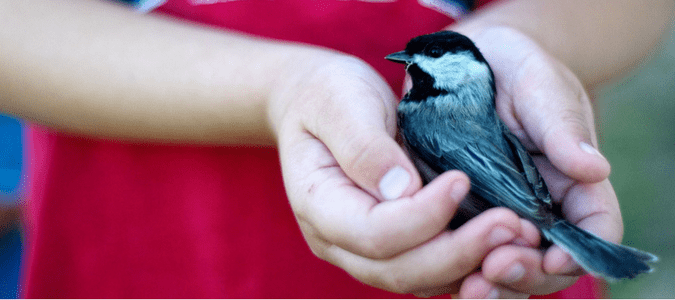 wildlife rescue Orlando