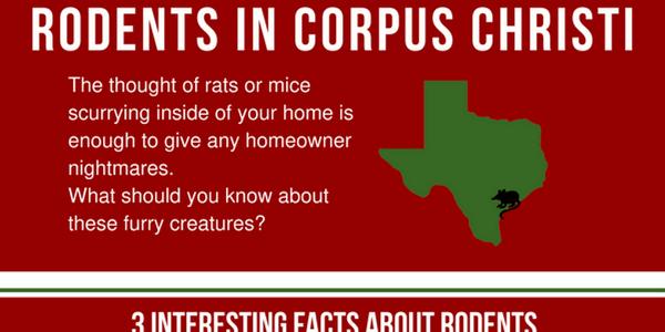 Corpus Christi Texas rats