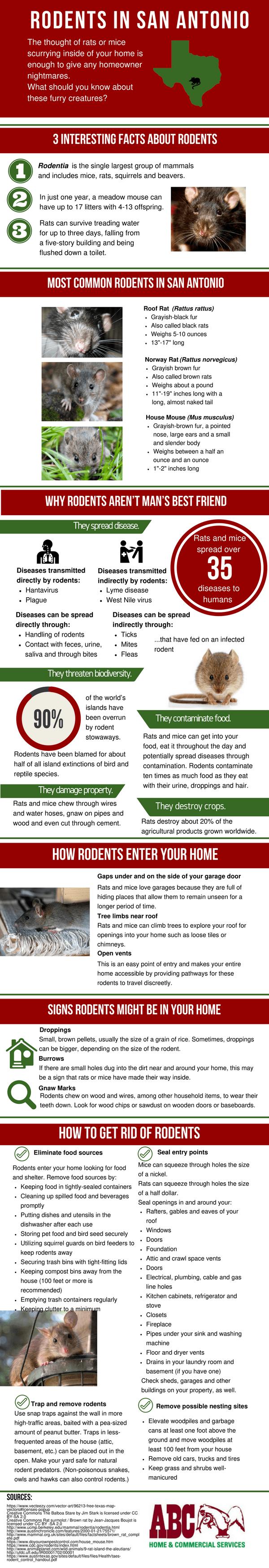 San Antonio Rodents Infographic Abc Blog