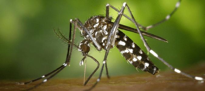 mosquito season florida