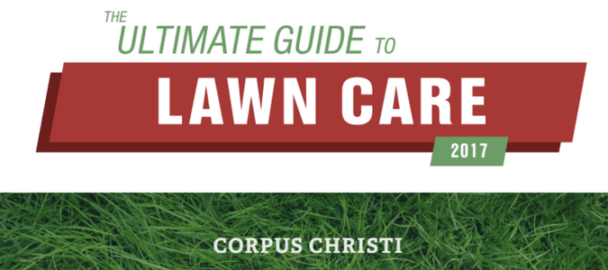 Corpus Christi Lawn Care Guide Abc Blog
