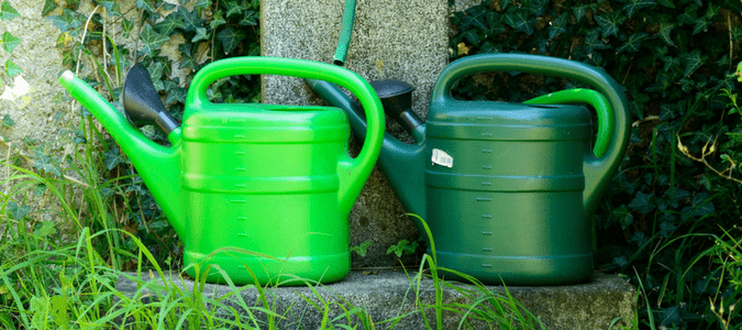 Watering dos and don'ts