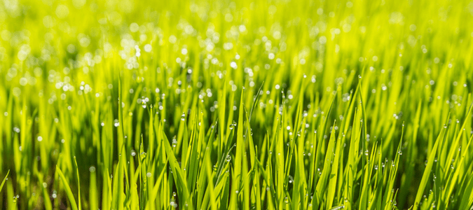 What kind of grass is best for my lawn