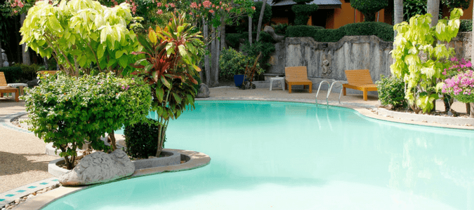Pool Plants To Turn Your Backyard Into An Oasis Abc Blog