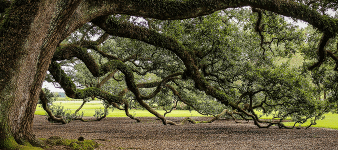 What You Need To Know About Shade Trees In Texas