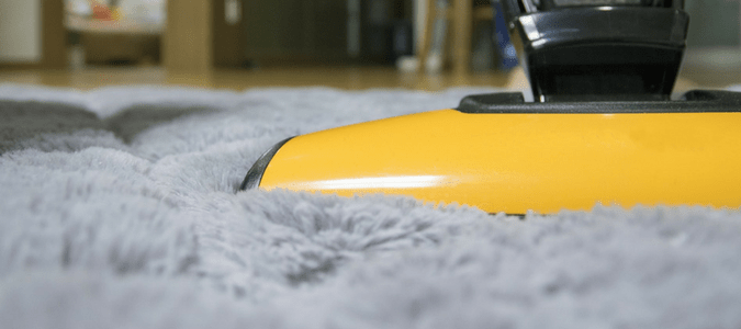 carpet beetle infestation