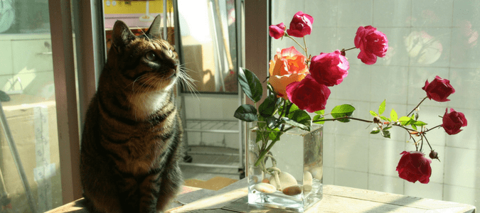 Are roses poisonous to cats