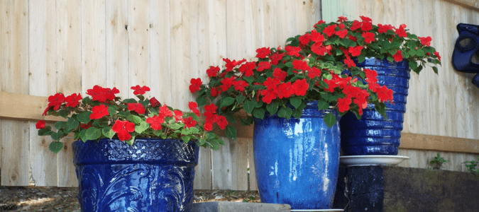 Heat tolerant container plants