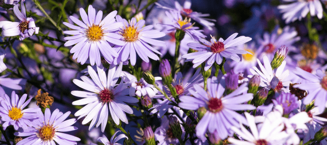 What flowers to plant in the fall in Texas