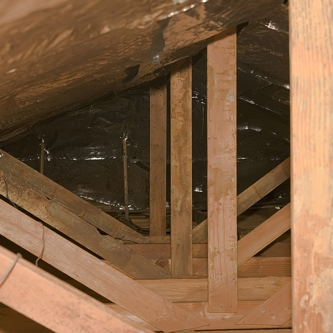 Pest In Your Attic 5 Signs There Is One And 8 Ways To