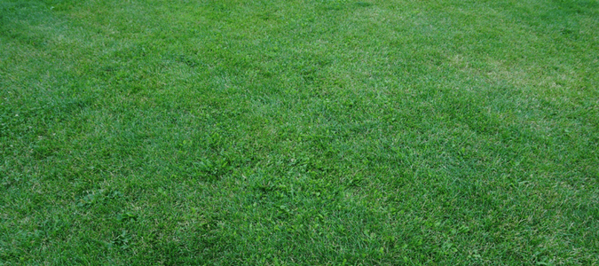 Will Lawn Fungus Go Away on Its Own