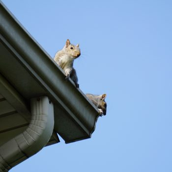 Keeping Rodents Out Of Your Home Abc Blog