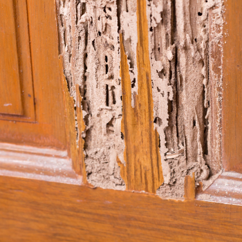 Signs Of Termite Infestation Abc Blog
