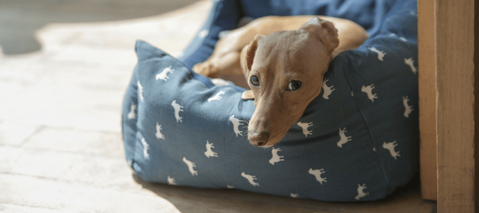 Can Fleas Live On Clothes Keeping Fleas From Spreading Abc Blog