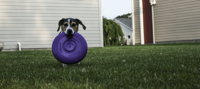 Home Remedies For Dog Fleas To Protect Your Pet | ABC Blog