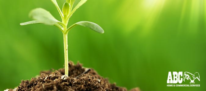 How Plant Probiotics Promote Soil and Plant Growth