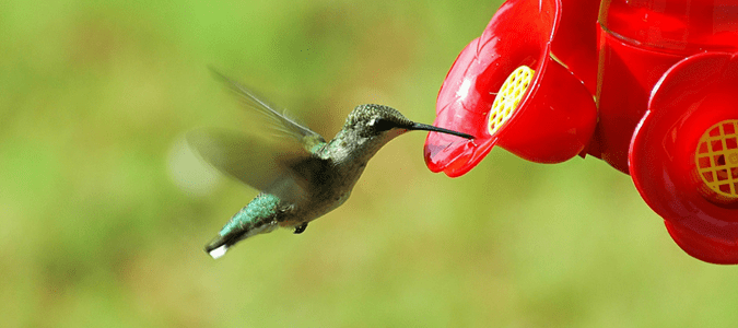 Hummingbirds in Texas