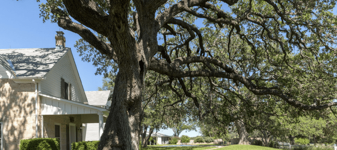 Texas Native Trees Species That Thrive In Our Climate