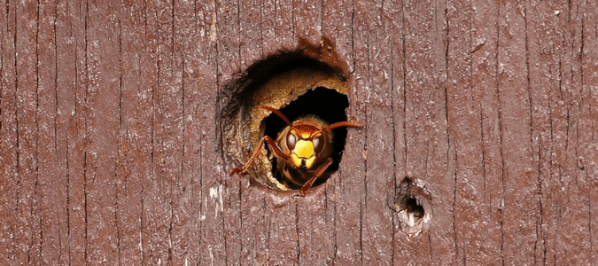 How to keep wasps from building nests