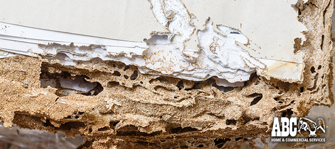 Spring Termite Inspection Checklist for Termite Awareness Week