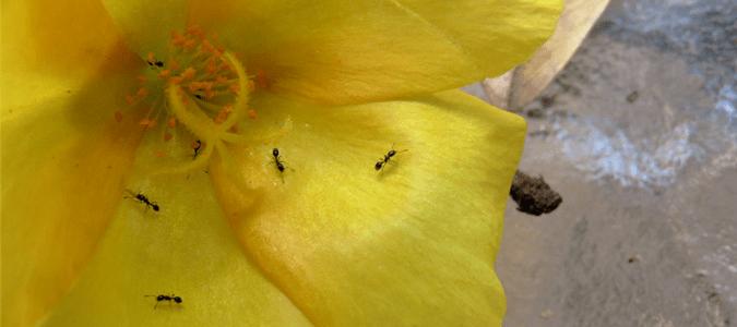 Tiny Ants Florida