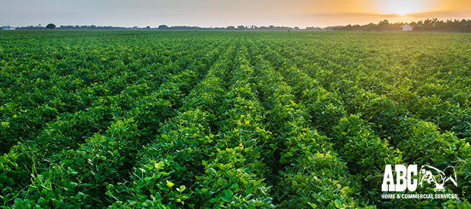 What Are Herbicides? Herbicide Pros & Cons