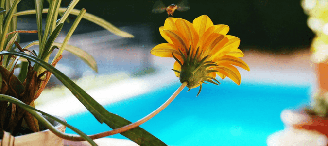 How To Keep Bees Out Of Pool And Avoid Other Stinging