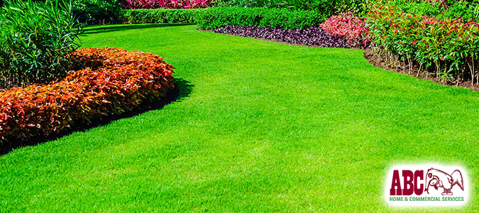 How to Start an Organic Lawn & Garden | National Lawn Care Month