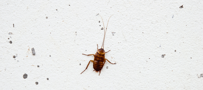 Tiny Roaches Are They Babies Or A Big Problem ABC Blog - Baby roaches in bathroom