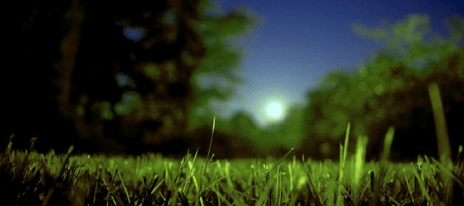 Watering lawn at night