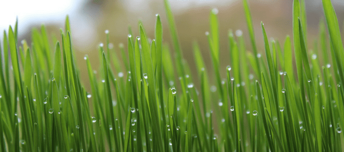 When to start watering lawn